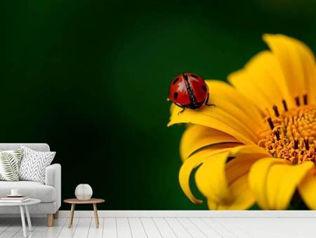 Photo Wallpaper Ladybug on the sunflower