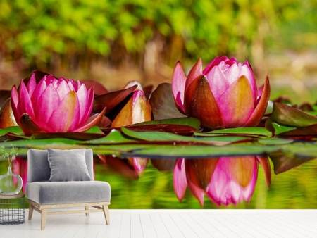 Photo Wallpaper Red water lily trio