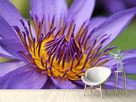 Photo Wallpaper XXL water lily in purple