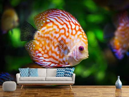 Papier peint photo Le poisson discus