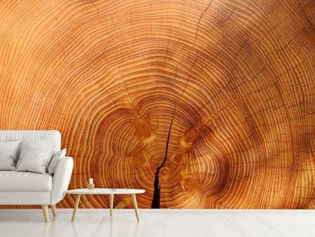 Fotobehang tree rings