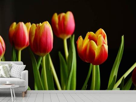 Photo Wallpaper Colorful tulips