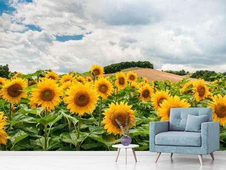 Fotobehang Landscape with sunflowers