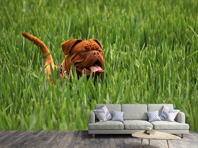 Fotobehang The mastiff in the grass