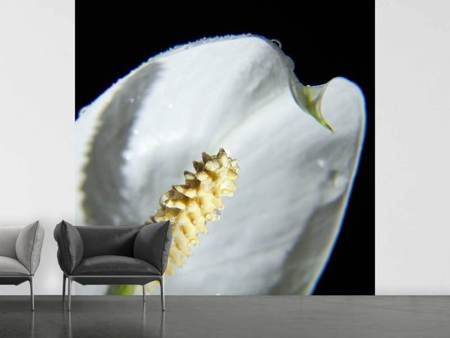 Fotobehang Calla Close up in white