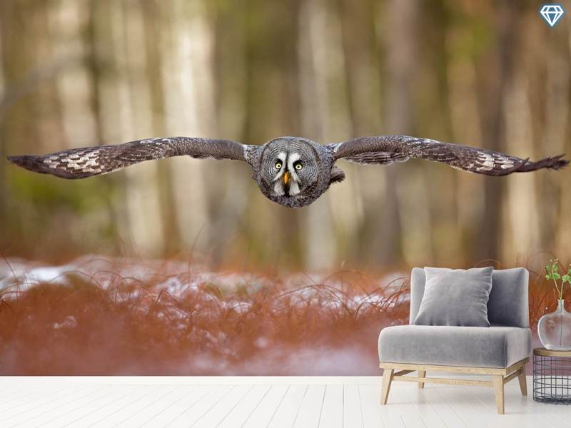 Papier peint photo Great Grey Owl
