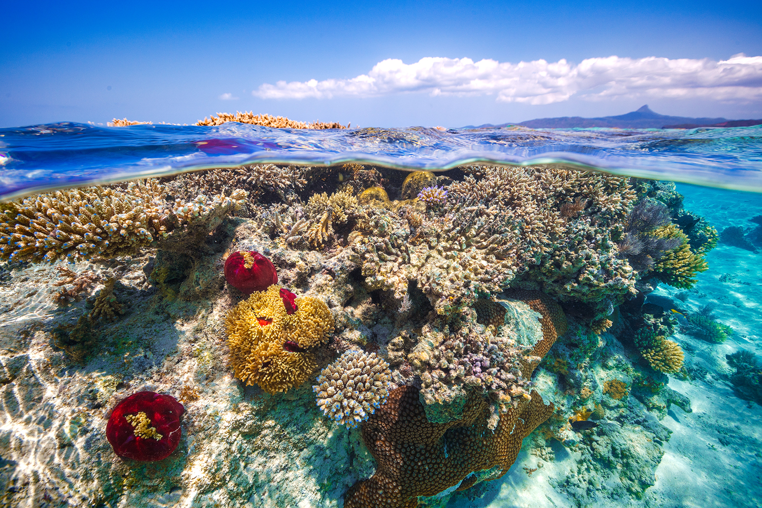 Fotobehang Mayotte - the Reef
