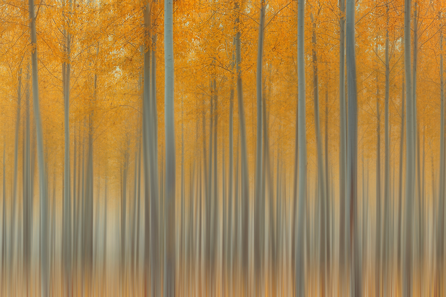 Photo Wallpaper Autumn Delight II