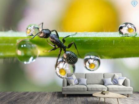 Photo Wallpaper The Ant Between The Drops
