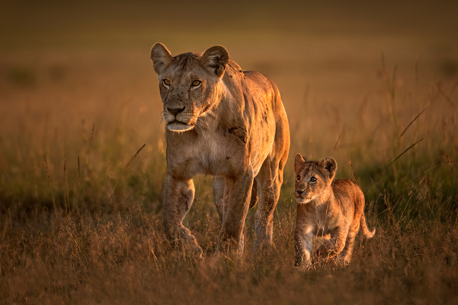 Fototapete Mom Lioness With Cub