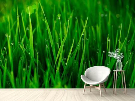 Photo Wallpaper Grass With Morning Dew