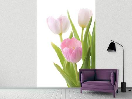 Photo Wallpaper The Tulips Trio