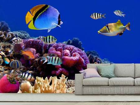 Photo Wallpaper World Of Fish