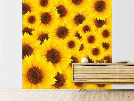 Fotobehang A Bouquet Sunflower