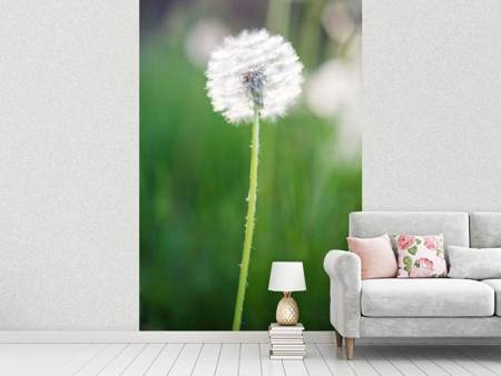 Photo Wallpaper Dandelion