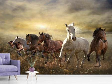 Photo Wallpaper Wild Wild Horses