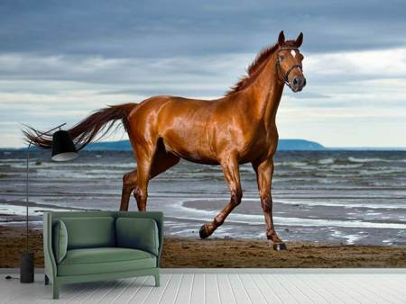 Fotobehang A Thoroughbred At The Sea