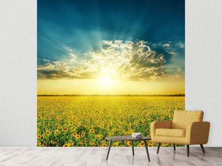 Photo Wallpaper Sunflowers In The Evening Sun