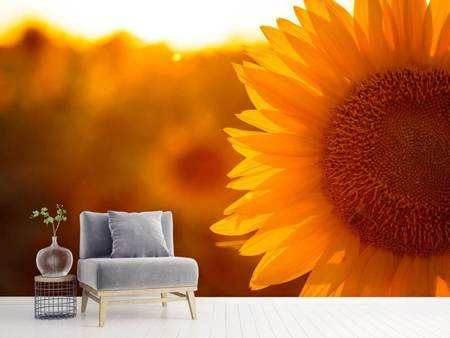 Photo Wallpaper Macro Sunflower